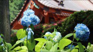 総本山の初夏 2020年6月|日蓮正宗布教部
